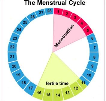 Ovulasyon (Yumurtlama) Testleri
